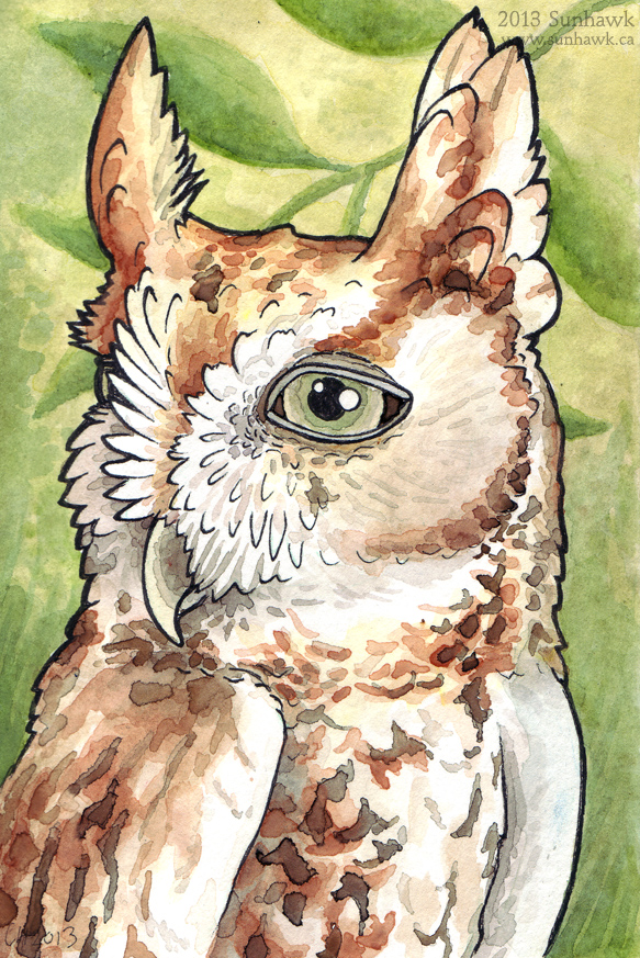 Sunhawk screech owl ash